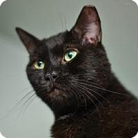Adopt A Pet :: Biggie - Queens, NY