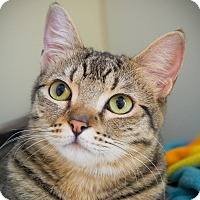 Adopt A Pet :: Gazelle - Los Angeles, CA