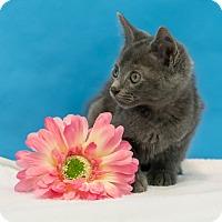 Adopt A Pet :: Columbia - Houston, TX