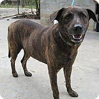 Labrador Retriever/Shepherd (Unknown Type) Mix Dog for adoption in Key Biscayne, Florida - Key