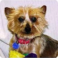 Adopt A Pet :: Sinbad-Ready! - Commerce TWP, MI