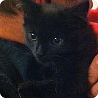 Adopt A Pet :: Patsy - Harriman, NY