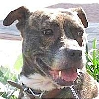 Adopt A Pet :: Jiggles - Kingwood, TX