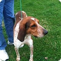 Adopt A Pet :: Lodi - Providence, RI