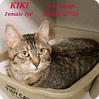 Domestic Shorthair Cat for adoption in Fayetteville, West Virginia - Kiki