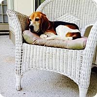 Adopt A Pet :: Freckles - Bluffton, SC
