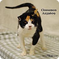 Adopt A Pet :: CINNAMON - Conroe, TX