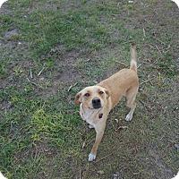 Adopt A Pet :: Valentine - Oviedo, FL