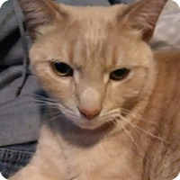 Adopt A Pet :: Mr. B - Middletown, OH