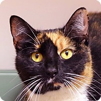 Adopt A Pet :: Misty - Norwalk, CT