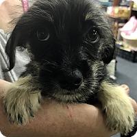 Adopt A Pet :: Electra - Redding, CA