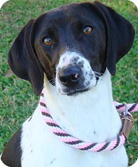 Hound (Unknown Type) Mix Dog for adoption in Red Bluff, California - Artimus