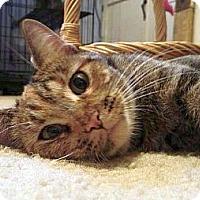 Adopt A Pet :: Sue - Green Bay, WI
