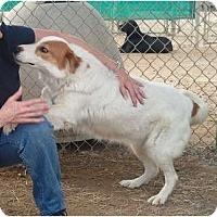 Adopt A Pet :: Mary Francis - Courtesy post - Glastonbury, CT