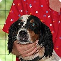 Adopt A Pet :: Britanie*ADOPTED!* - Chicago, IL