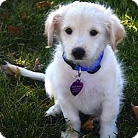 Adopt A Pet :: SCOTTY - Mission Viejo, CA