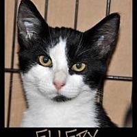 Adopt A Pet :: ELLERY - Alamogordo, NM
