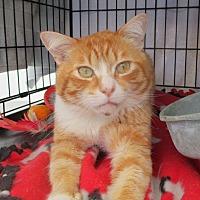 Adopt A Pet :: IVANS - Los Angeles, CA
