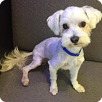Adopt A Pet :: HARLEY - Los Angeles, CA