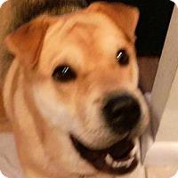 Adopt A Pet :: Carmella - Barnegat Light, NJ