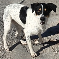Adopt A Pet :: Laverne - Seguin, TX
