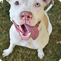 Adopt A Pet :: Journey - Fayette, MO