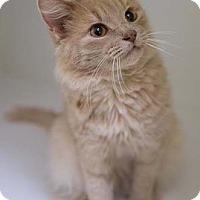 Adopt A Pet :: John Henry - Merrifield, VA