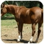 Photo 3 - Thoroughbred for adoption in El Dorado Hills, California - Rye