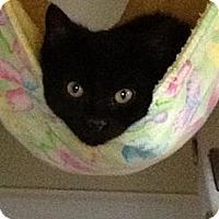 Adopt A Pet :: Prissy - Monroe, GA
