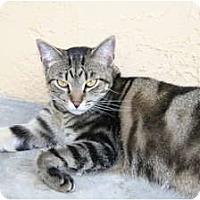 Adopt A Pet :: Tracy - Naples, FL