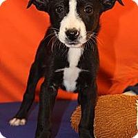 Adopt A Pet :: Decker - Broomfield, CO