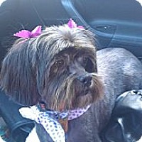 Adopt A Pet :: Tana - Sheridan, OR