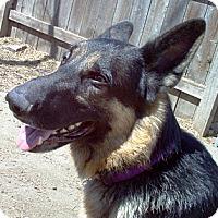 Adopt A Pet :: Thor - Evergreen Park, IL