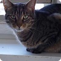 Adopt A Pet :: Simba - Ashland, OH