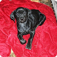 Adopt A Pet :: Eli - in Maine - kennebunkport, ME