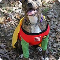 Adopt A Pet :: Marlie - Reisterstown, MD