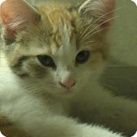 Adopt A Pet :: LEVERN - Acme, PA