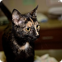 Adopt A Pet :: Victoria - Medina, OH