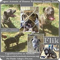 Adopt A Pet :: Fred aka Flik - Hearne, TX