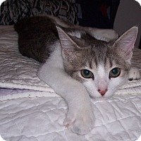 Adopt A Pet :: Surry - Richmond, VA