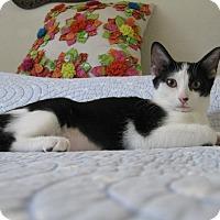 Adopt A Pet :: BEI BEI - Brea, CA