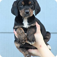 Adopt A Pet :: Benjamin - Starkville, MS
