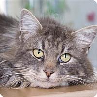 Adopt A Pet :: Bubba - Atascadero, CA
