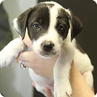 Adopt A Pet :: Clancey - West Caldwell, NJ
