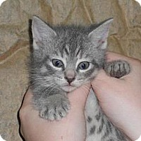 Adopt A Pet :: Will - Norwich, NY