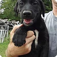 Adopt A Pet :: Princess - Danbury, CT