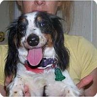 Adopt A Pet :: Tootsie - Antioch, IL