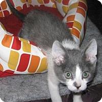 Adopt A Pet :: Peter - Sacramento, CA