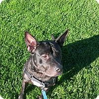 Adopt A Pet :: Jack - Muskegon, MI