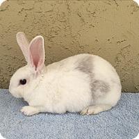 Adopt A Pet :: Brother & sister - Bonita, CA